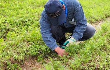 就労継続支援A型農業