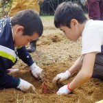 COCOきっず 芋掘り!3