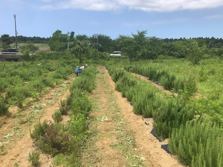 JOYWORKZの農業